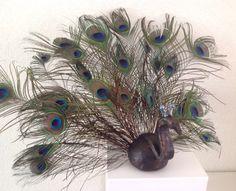 Pauw / peacock € 49,- Bird, Animals, Animales, Animaux, Birds, Animal, Animais