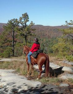 Dupont State Forest, Cowgirl And Horse, Art Pieces, Horses, Mountains, Cowgirls, Nature, Travel, Animals