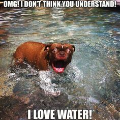 Cute Dog Quotes And Sayings On Pinterest I M Awesome