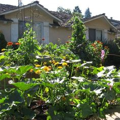 How Suburban Gardens and Local Action Heal the Planet