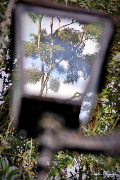 A natureza presa no reflexo do vidro.