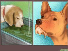 3 Ways to Treat Heat Stroke in Dogs
