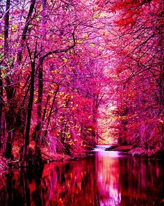 everyday a different color, beautiful gifs, soft goth, nature. images that I like and attract my attention. I hope you'll find images here for your taste too. Beautiful World, Beautiful Images, Beautiful Wallpaper, Beautiful Dream, Simply Beautiful, Pink Forest, Jolie Photo, Belleza Natural, Amazing Nature