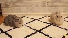 Cute Creatures, Beautiful Creatures, Animals Beautiful, Baby Bunnies, Cute Bunny, Bunny Pics, Bunny Rabbits, Cute Little Animals, Cute Funny Animals