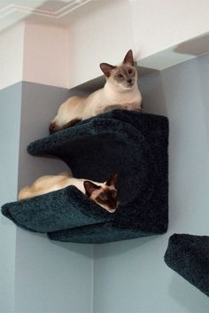 cat shelves | CatsPlay Cat Furniture Fall Finds - Fun New Products and Special ...