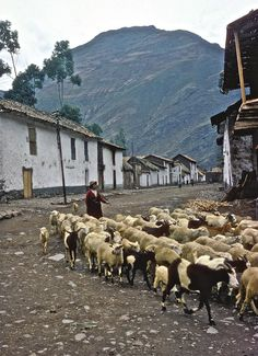 Life in the Andes, 1964