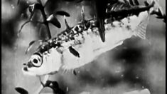 """Fish Biology: """"A Day at the River: A Film Lesson in Nature Study"""" 1928 DeVry School Films https://www.youtube.com/watch?v=JKf2Xippu5k #fish #biology #nature"""