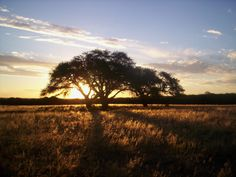 Argentina | La Pampa Argentina - HD Travel photos and wallpapers
