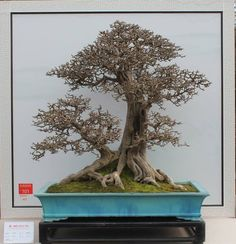 Remarkable Bonsai in Chinese style http://miniscaping.com/
