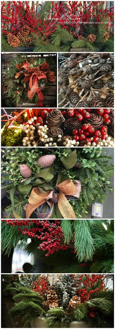 Known for superior quality & selection, locally grown annuals, perennials, hanging baskets & nursery stock are easily recognizable & guaranteed to last. Get your Minnesota Grown winter decorations and florals from Tangletown Gardens LLC in Minneapolis, Minnesota and celebrate the holidays with fresh, local products and services!