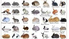 Resultado de imagen de campo para conejos