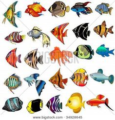 Fish fin Illustrations and Stock Art. Fish fin illustration graphics and vector EPS clip art available to search from thousands of royalty free clipart providers. Fish Drawings, Art Drawings, Fish Fin, Underwater Painting, Sea Creatures, Painted Rocks, Painted Fish, Kids Crafts, Art Projects