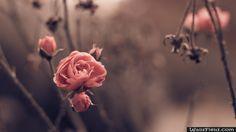 Autumn Blossom - http://wallsfield.com/autumn-blossom-hd-wallpapers/