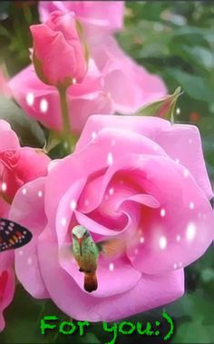 𝓕𝓸𝓻 𝔂𝓸𝓾🍃🌹🍃 - Schön gif Beautiful Flowers Images, Good Morning Beautiful Images, Beautiful Love Pictures, Beautiful Flowers Wallpapers, Beautiful Gif, Flower Images, Flower Pictures, Love Flowers, Beautiful Roses