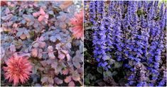 Cele mai frumoase plante care acopera solul - Case practice Case, Sun, Lawn, Plant