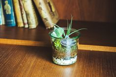 【新連載】GreenSnap×キナリノ「グリーンや花をもっと身近に」 Vol.1 テラリウムの作り方