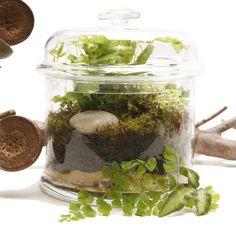 fern and moss terrarium in a squat jar