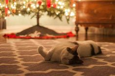Don't question the tree, cats — just nap under it. - Photo: Courtesy of The Dodo.