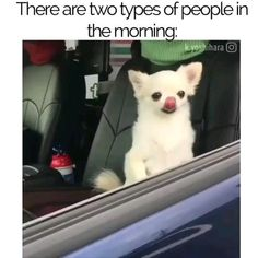 Funny Dog Memes, Funny Animal Memes, Funny Animal Videos, Cute Funny Animals, Funny Animal Pictures, Funny Relatable Memes, Cute Baby Animals, Funny Cute, Funny Dogs