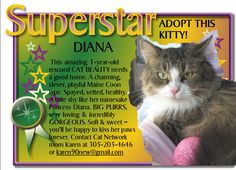 Diana The Superstar wants to shine bright in a new home. Visit Riverfrontcats.com for more info about her.