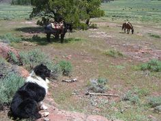 Poncho looking over the herd...