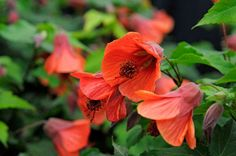 Help, advice & tips from the RHS on all kinds of plants / RHS Gardening