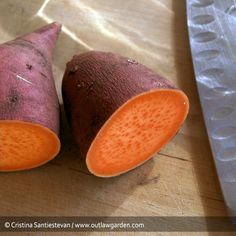 Grow your own sweet potatoes :: Outlaw Garden. Not to mention the flowers on this plant are gorgeous and morning glory-esque!  Good front yard veggie (ok tuber).