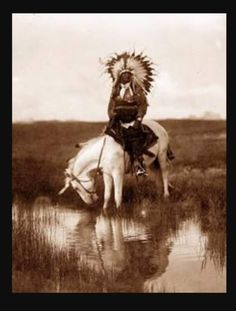 You are viewing an impressive image of Valley Rosebud, a Cheyenne Chief. It was taken in 1905 by Edward S. The picture shows a Cheyenne Indian Warrior, wearing a feather head dress, on horseback. The horse is drinking water from a small stream .