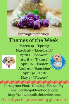 Mr.N from @MrNTerrier and Spencer are hosting an Instagram Spring Time Photo Challenge! We are giving away over $400 worth of prizes! Learn more by clicking on the image.: