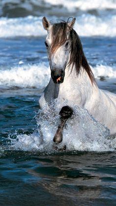 horse, jump, water, sea