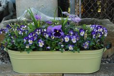 spring planting in an oval tub