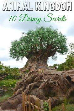 10 VIP Disney Animal Kingdom Secrets - Traveling Mom
