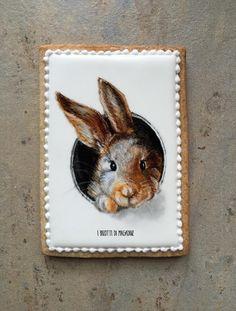 A Curious Bunny