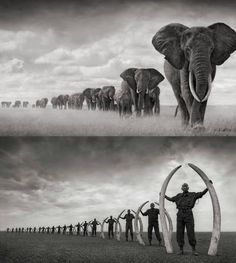 This picture says it all..!! STOP POACHING KENYA'S ELEPHANTS!