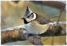 Suvikumpu Bird Feathers, Birds, Winter, Christmas, Animals, Winter Time, Xmas, Animales, Animaux