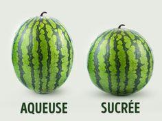 Comment choisir labonne pastèque