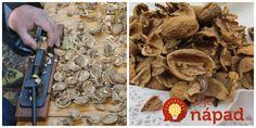 Po tomto zistení už nikdy nevyhodíte do koša ani jedinú: Orechové škrupinky počas jesene vyvážite zlatom!