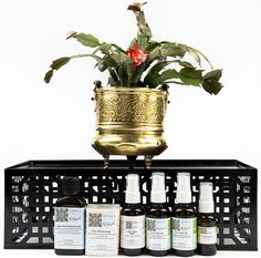 Buy 2 Get 1 Free store wide, including on KENZA Pure Prickly Pear Seed Oil (no code needed). Perfect time to stock up, get your Mother's Day gift or simply share with your friends. Hurry this fabulous offer ends May 7th, 2015. http://kenza-international-beauty.com/ #Mothersday #special #gift