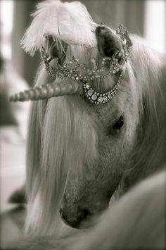 This horse will pull my carriage at my wedding