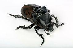 recycling und kunst käfer