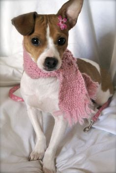Katie the rattie in her pink scarf ~