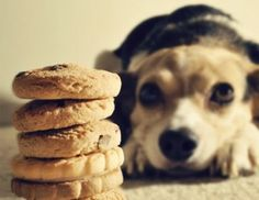 5 Fun Facts About Dogs You Might Not Know | Serenity Health Blog