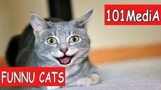 Постарайся не рассмеяться - Самые Смешные Коты 2017   FUNNY CATS   Смешн...