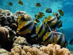 Snorkeling in Sharm El Sheikh - El Faraana Bay- Ras Um Sid