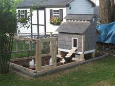 Keeping chickens has taken off in a big way here in the UK. In my road alone I know of 3 neighbours who are building chicken coops and are...