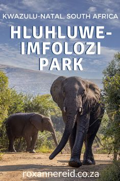 Planning a trip to Hluhluwe-Imfolozi Park in KwaZulu-Natal, South Africa? Find out why to stay at Rhino Ridge Safari Lodge – the best Hluhluwe Game Reserve accommodation. Enjoy guided game drives to see the Big 5 and wild dogs, as well as lots of other wildlife. Admire the hilly landscape. Eat restaurant-quality food. Swim in the rimflow pool. Have a spa massage. Go bird-watching.Do a bush walk in the park or along the gorge. Support responsible tourism. Kruger National Park, National Parks, Hluhluwe Game Reserve, Wildlife Safari, Kwazulu Natal, Slow Travel, Big 5, Spa Massage, Dog Runs