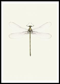 Tavla / poster med vintage insekt, trollslända.