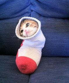 This cat thinks it is a disembodied foot. | 29 Cats Who Think They Are Not Cats