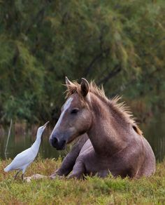 The fence was mended Your Highness and security has been replaced to its fullest. The Kingdom remains yours. Pretty Horses, Horse Love, Beautiful Horses, Animals Beautiful, Animals And Pets, Funny Animals, Cute Animals, Baby Horses, Wild Horses