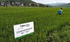 Did you know that pollutants in soil pose a risk to human health? MicroGen Biotech is using AgTech to remove toxins and improve crop health.
